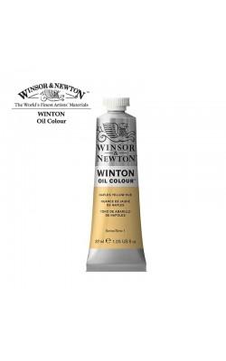 Масляные краски Winton, 37мл, оттенок желтый неаполитанский