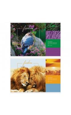 """Альбом для рисования 20л., А4, на скрепке ArtSpace """"Природа. Freedom"""", глянцевый уф-лак"""